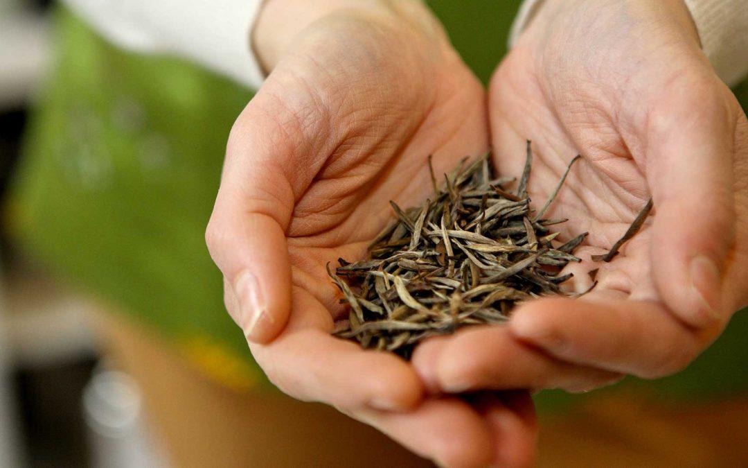 Cosa rappresenta una tazza di tè?